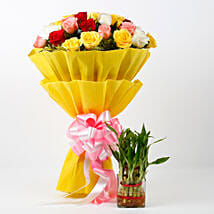 Two Layer Lucky Bamboo Plant With Mixed Roses Bouquet: Flowers to Kiccha