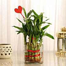 Two Layer Lucky Bamboo With Heart Shaped Tag: Plants - Same Day Delivery