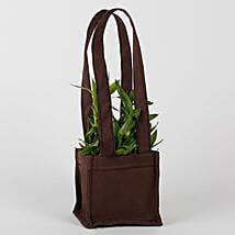 Two Layered Bamboo in Coffee Brown Bag: Send Lucky Bamboo for Teachers Day