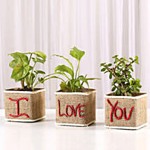 Set of 3 I Love Your Green Plants: Home Decor