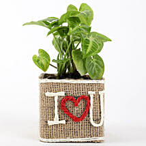 Syngonium Plant in Jute Wrapped I Love You Vase: Plants to Bengaluru