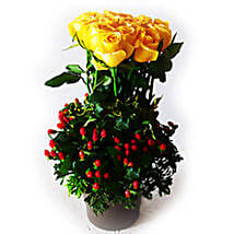 Yellow Roses in Plastic Pot: Get Well Soon Gifts to Malaysia
