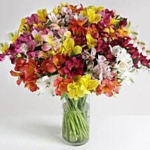 32 British Alstroemeria: Friends