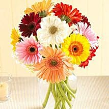 Multi Color Gerberas in Vase: Send Flowers to Portland
